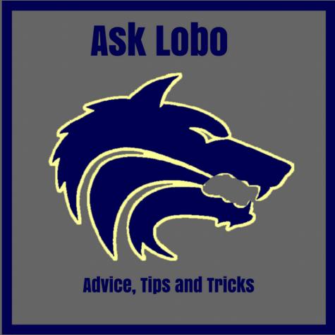 Dear Lobo