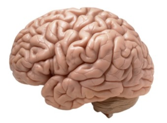 A brain to show its association with mental health.